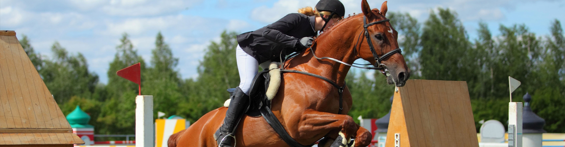 An image of a horse taking part in an event